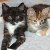 Kitten Progression: At-a-Glance - Alley Cat Allies - how to estimate a kitten's age based on appearance