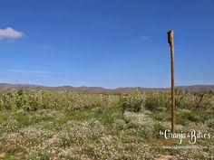 Caja nido para murciélagos especial para postes en cultivo ecológico de peras.