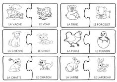 Animals: females and bbs Fun Facts About Animals, Animal Facts, French Teaching Resources, Teaching French, Rare Albino Animals, Cycle 1, Core French, African Grey Parrot, Petite Section