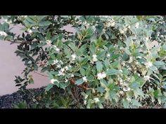 SD KERT - kertépítés - Spiegel Ákos - YouTube Plants, Youtube, Plant, Youtubers, Youtube Movies, Planets