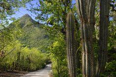 Het Christoffelpark van Curaçao is een groot natuurreservaat van bijna 2000 hectare groot. Het park heeft de meest gevarieerde flora en fauna van heel Curaçao en je ziet hier veel planten en dieren die je ergens anders op het eiland niet zal tegenkomen. In het park staat ook de bekende Christoffelberg, het hoogste punt van Curaçao. De berg is 377 meter hoog en is te beklimmen. Als je dit van plan bent, doe dit vroeg in de ochtend zodat het nog een beetje koel is!