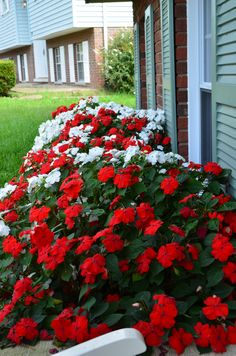 Red and white impatiens. <3