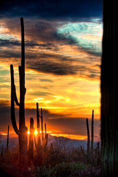 Saguaro cactus in the setting sun. Saguaro National Park, outside of Tucson, Arizona Beautiful Sunset, Beautiful World, Beautiful Places, Beautiful Friend, Foto Picture, All Nature, Amazing Nature, Amazing Sunsets, Parcs