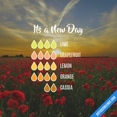 Its a New Day - Essential Oil Diffuser Blend