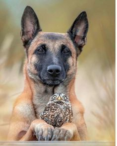 Two best friends! Photographer ( say Wild Animals Photos, Animals And Pets, Funny Animals, Cute Animals, Malinois Puppies, Unlikely Friends, Two Best Friends, Creature Comforts, Big Dogs