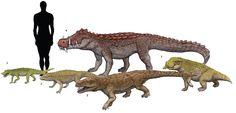 1. Anatosuchus minor 2. Notosuchus terrestris 3. Postosuchus krikpatricki 4. Kaprosuchus saharicus 5. Simosuchus clarki