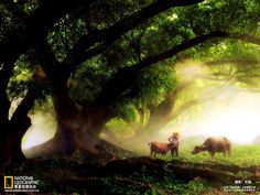 China Fotografia por National Geographic Channel