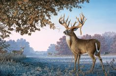 Big Country Bucks - whitetail deer painting by Larry Zach