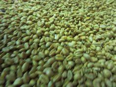 国産小麦を使ったこだわり醤油