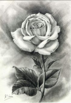 45 beautiful flower drawings and realistic color pencil draw Beautiful Flower Drawings, Pencil Drawings Of Flowers, Flower Sketches, Pencil Art Drawings, Art Drawings Sketches, Realistic Drawings, Flower Drawing Tutorials, Rose Drawings, Rose Drawing Tattoo