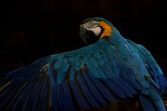 Colors in the dark by Ricardo Venerando