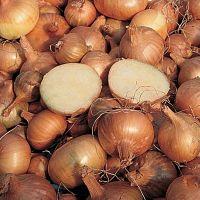 Plantuien - sjalotten - knoflook