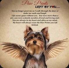 Yorkie Angel Paw Print 12 X 12 Plaque Paw Prints Left By You Name Personalization Yorkies, Yorkie Puppy, Biewer Yorkie, Havanese, Chihuahua, Cute Puppies, Cute Dogs, Animals And Pets, Cute Animals