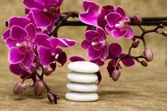 zen flores