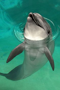 Happy Dolphin | Best Android Wallpaper! Best Android Themes and Background! - Android Park