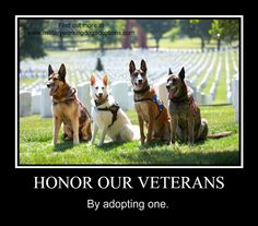 Honor Our Veterans. Adopt a military working dog.