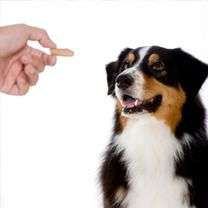 #Natural #Dog #Treats, Keeping Your Dog #Healthy
