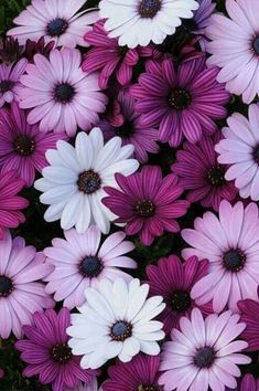 Find images and videos about pink, white and flowers on We Heart It - the app to get lost in what you love. Purple Flowers Wallpaper, Flower Iphone Wallpaper, Flowery Wallpaper, Blue And Purple Flowers, Beautiful Flowers Wallpapers, Sunflower Wallpaper, Flower Backgrounds, Galaxy Wallpaper, Iphone Wallpaper Photos