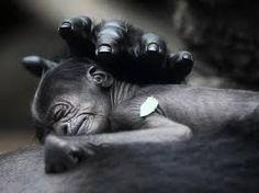 Resultado de imagen para animales con sus crias