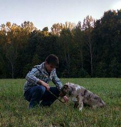 Loves playing fetch. Australian Shepard.