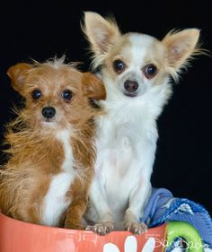 Jam and Jelly were rescued from a pound where they were surrendered.  They are currently looking for a forever home.  Are you their family?