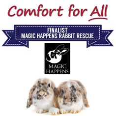 Comfort for All Finalist Magic Happens Rabbit Rescue