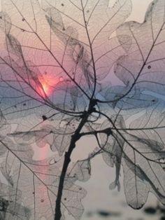 Autumn, transparent oak leaves - fascinating picture