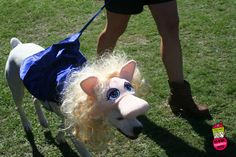 Miss Piggy at our costume contest! | First Coast No More Homeless Pets | #dogtoberfest2014 #fcnmhp