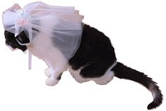 Cat Wedding Veil - the most ridiculous thing ever but it looks like my kitty!