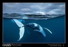 Sono considerati gli Oscar della fotografia naturalistica. Anche quest'anno la 13esima edizione di Oasis Photocontest ha premiato le migliori immagini di