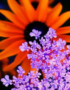 Image detail for -Orange and Purple Flower Painting - Abstract Orange and Purple ...