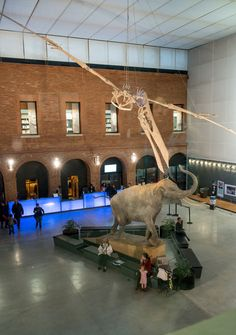 Comprendre comment fonctionne notre planète : les animaux, les plantes... au Muséum de Toulouse © Museum de Toulouse - J-J. Ader #toulouse #visiteztoulouse