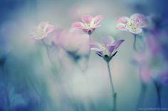 35PHOTO - Yana Bondareva - ***