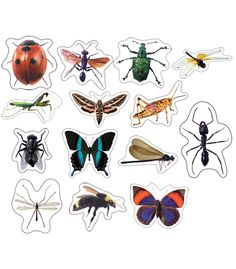 Insects: Photographic Shape Stickers - Carson Dellosa Publishing Education Supplies #CDWISHLIST