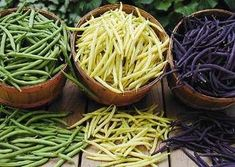 Different varieties of green beans... How to grow, cook, can, and freeze them... Huge variety of recipes from around the world, too.
