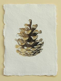 Pine cone original watercolour illustration study painting.
