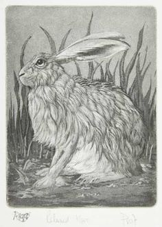 """Spring Hare"" by Clive Riggs Jack Rabbit, Rabbit Art, A Wild Hare, Year Of The Rabbit, Into The Fire, Bunny Art, Animal Sketches, Gravure, My Animal"