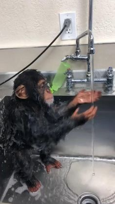 Baby chimp taking a shower is part of Cute baby animals - 100 points Funny Animal Videos, Cute Funny Animals, Cute Baby Animals, Animal Memes, Funny Cute, Animals And Pets, Funny Monkeys, Wild Animals, Cute Creatures