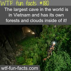"In Vietnam, a farmer newly found a cave, deep in the jungle. This cave discovered in but nobody explored that cave. It is named after ""Son Doong"" meaning ""Mountain River Cave."" This cave is amazing, Dong Hoi, Scary Facts, Wtf Fun Facts, Random Facts, The More You Know, Good To Know, Vietnam Cave, Laos Vietnam, Visit Vietnam"