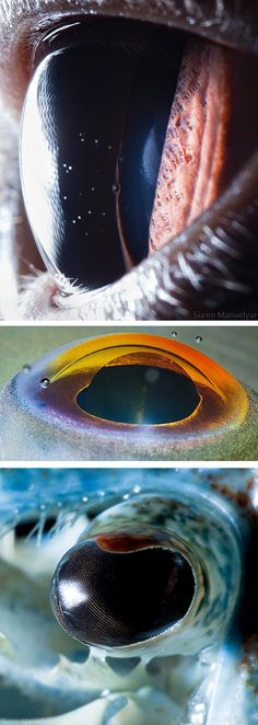 'Animals Eyes' by Suren Manvelyan is an exploration of the beauty and intricacy that can been seen in the eyes of life on Earth. Get your own up close shots with the Macro from our 2-in-1 Wide/Macro Lens. http://photojojo.com/store/awesomeness/cell-phone-lenses//?utm_content=buffer0dd4a&utm_medium=social&utm_source=pinterest.com&utm_campaign=buffer