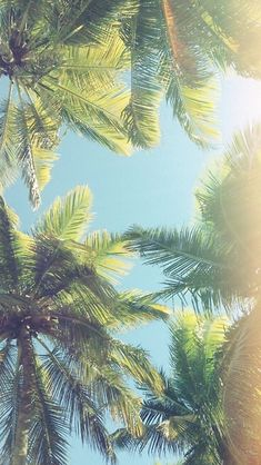Palm trees iphone wallpaper                                                                                                                                                     More