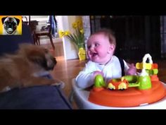 Funny Pets,  Animals, Vines, dogs, funny videos 2014 - 2015