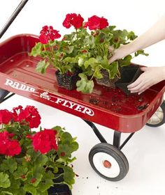 Create a Wagon Flower Display Fill a Radio Flyer with a flat or two of bright red geraniums, and you're ready to roll.