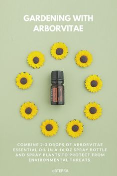Arborvitae essential oil is one of many essential oils that can aid you in your gardening. Use Arborvitae to help protect your garden against environmental threats.