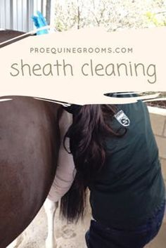 Cleaning your horse's sheath or udders. This required chore can help keep your horse comfortable, and for geldings and stallions, a clean sheath free of beans makes him more comfortable while urinating. Dressage, Horse Care Tips, Horse Training Tips, Horse Grooming, Horse Barns, Horse Stalls, Equestrian Outfits, Horse Love, The Ranch