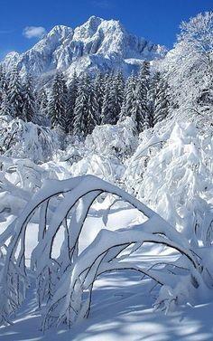 69 Ideas For Photography Landscape Snow Earth Winter Szenen, Winter Love, Winter Magic, Winter Season, Winter Christmas, Deep Winter, Winter Trees, Winter White, Winter Pictures
