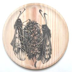 plato de madera ilustrado 26 cmt #entomology @Rauldelsol - Wood dish illustrated 26 cmt