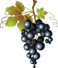 This high quality free PNG image without any background is about grape, berry, grapes, fruit and black grapes. Clip Art Pictures, Free Pictures, Raisins Image, Photoshop, Emoji Tattoo, Vine Fruit, Vine Tattoos, Première Communion, Wine Logo