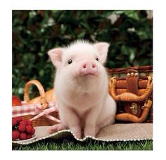 "Piglet: ""I'm assuming that this picnic is 100% vegan?!"""