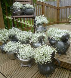 Vintage teapots with gypsophila
